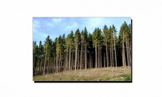 عالمی یومِ ماحولیات اور درولئی کے جنگلات