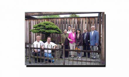 جاپان پر گرائے جانے والے ایٹم بم میں بچ جانے والا درخت