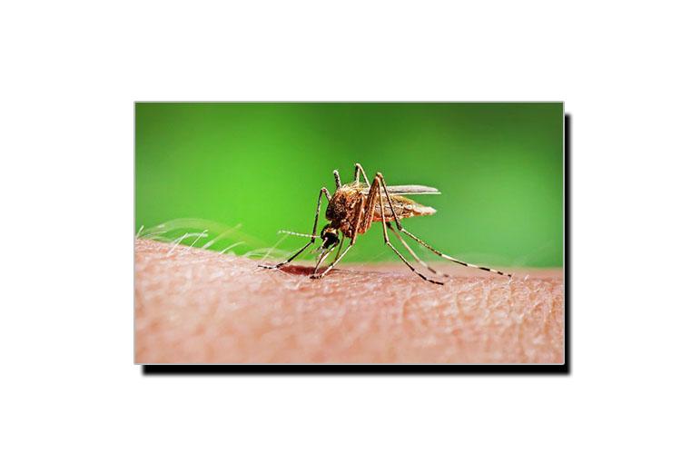 مچھر بارے وہ حقیقت جو کم لوگ جانتے ہیں