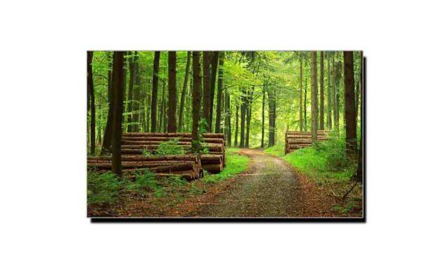 جنگلات ماحول دوست ہی نہیں انڈسٹری بھی ہیں
