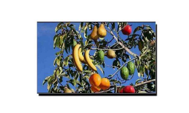 یہ ہے 40 مختلف پھل دینے والا درخت